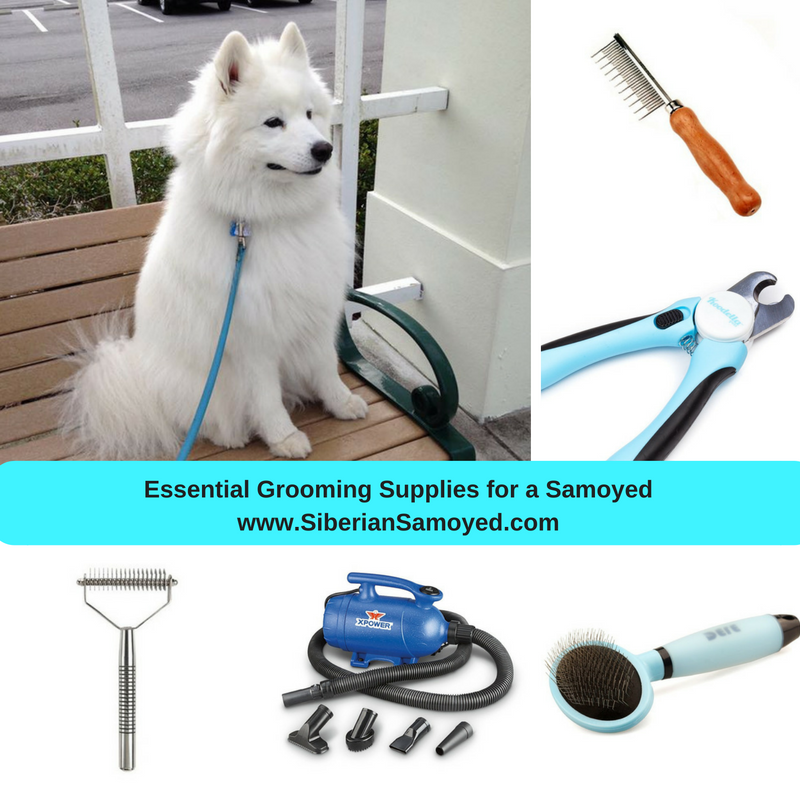 Essential grooming supplies for samoyeds the samoyed essential grooming supplies for samoyeds voltagebd Image collections